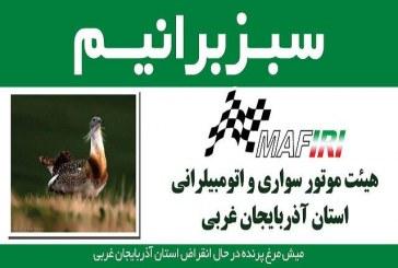 چاپ تصویر میش مرغ بر روی خودروهای مسابقه اتومبیلرانی
